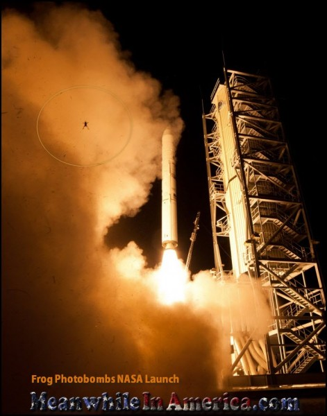 Frog Photobombs NASA Launch Meanwhile In America
