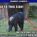 Meanwhile, At The Zoo ...   monkey butt talk to this side Meanwhile In America 120x120c
