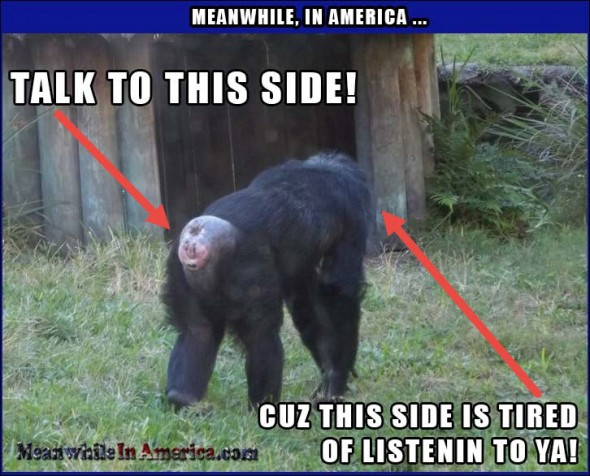 Meanwhile, At The Zoo ...   monkey butt talk to this side Meanwhile In America 590x476