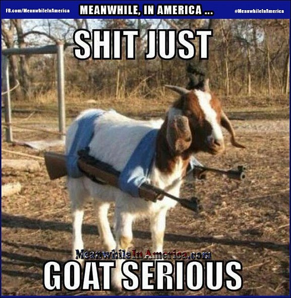 In America, Even Farm Animals Have to Pack Heat.   Shit Just Goat Serious Guns Meanwhile In America 577x590